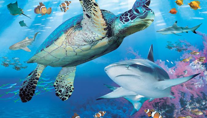 Sea Life Centre Brighton Pictures