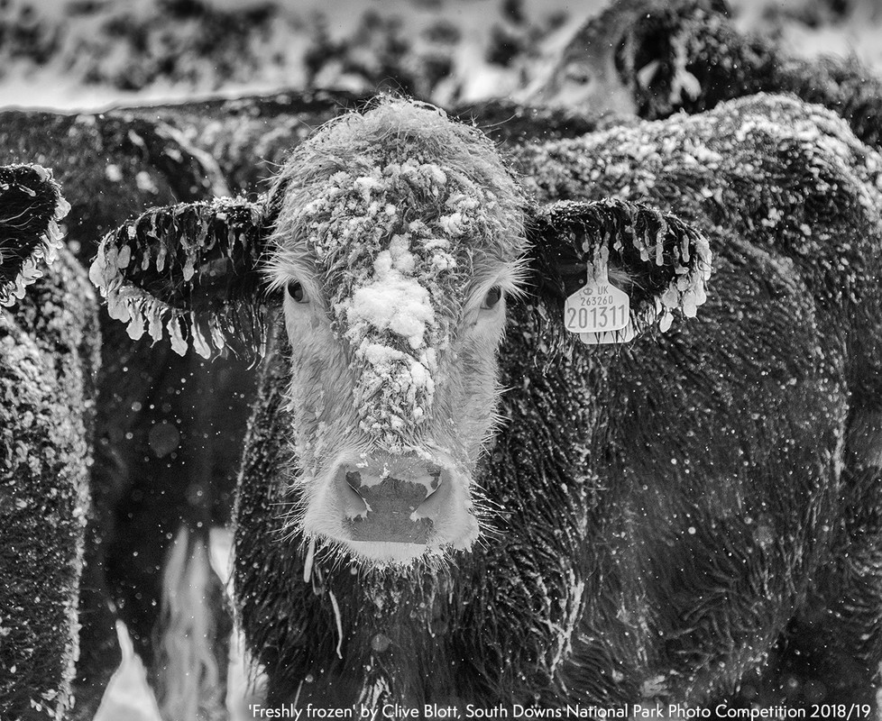 RS7926_'Freshly_frozen'_by_Clive_Blott_South_Downs_National_Park_Photo_Competition_2018-19-scr