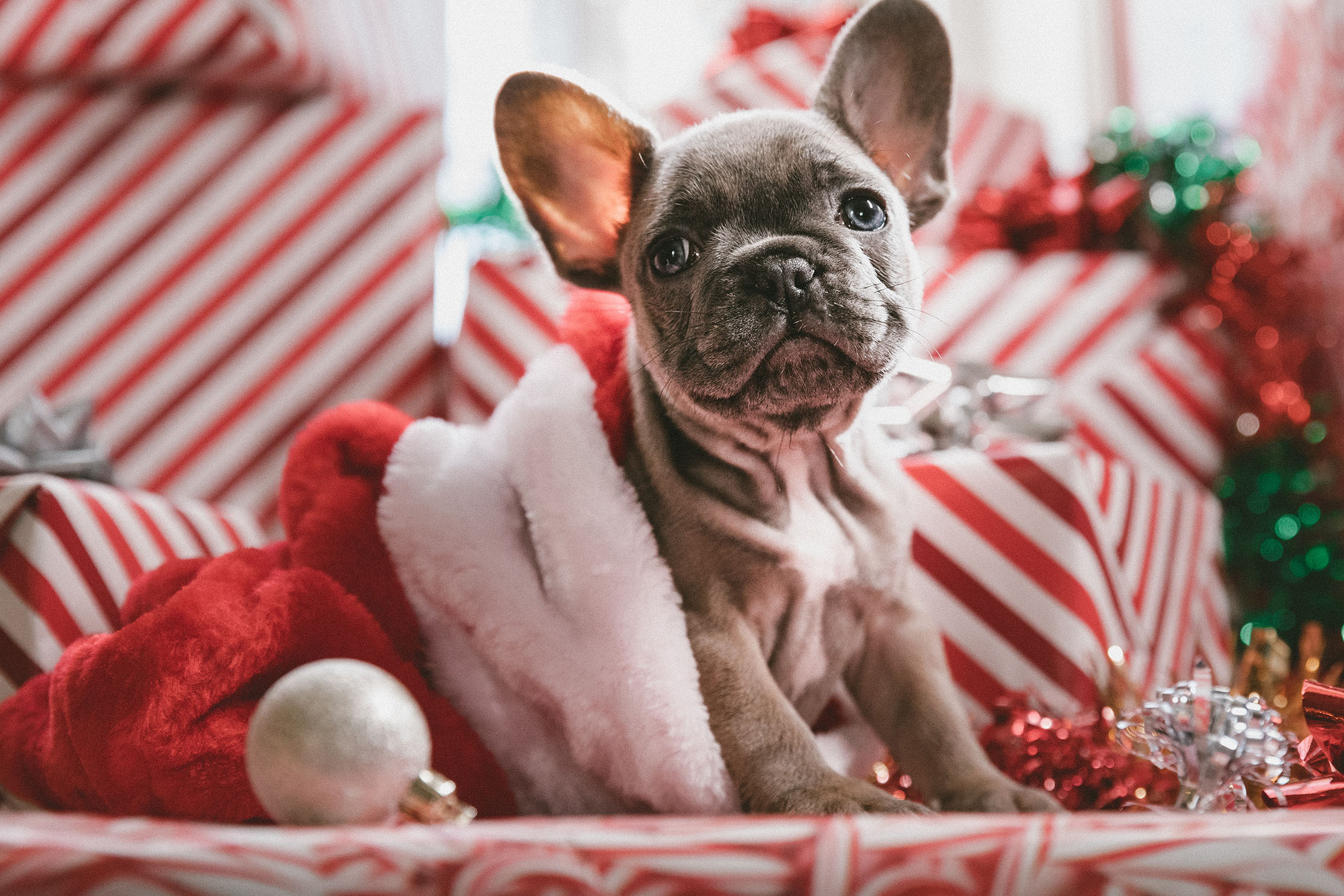 Dogs can grab some time with Santa, as You're Pawfect's Christmas event comes to their shop at 32 Ship St, Brighton BN11AD on Sat 14 Dec 2019