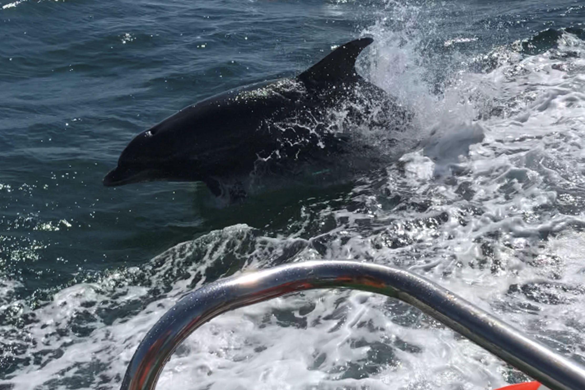 Brighton Dolphin Project and Shoreham Port are teaming up so we can better understand marine life off the Sussex coast