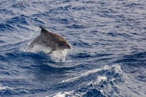 dolphin at brighton beach sussex wildlife